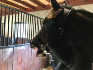 cranio sacraal paarden