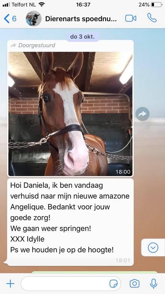 Behandeling Cranio Sacraal therapie paard