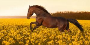blokkade vrij paard