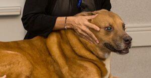 cranio sacraal therapie voor honden